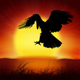 Silhouette of eagle with big sun Royalty Free Stock Images