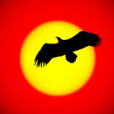 Silhouette of an eagle Stock Image