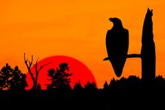 Silhouette of Peaceful Eagle at Sunset. A silhouette of an eagle perched on a leafless tree. The raptor is positioned in front of a burning orange sky and a huge Royalty Free Stock Photography