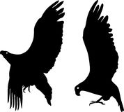 Silhouette of eagle. Silhouette of two big eagle in flight Stock Photo