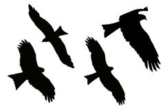 Silhouette of Eagles - Black Kite Royalty Free Stock Images