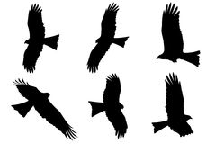 Silhouette of Eagles - Black Kite Stock Photo