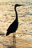 Silhouette of egret Stock Photo