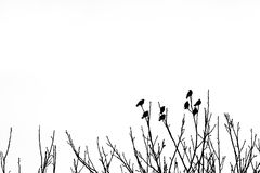 Silhouette of eight birds оn top of tree branches in the winte. R with blue sky in background Stock Photography