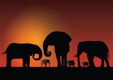 Silhouette of elephans. Silhouette of elephant front of moon Stock Image