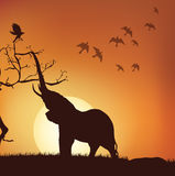 Silhouette of elephant Stock Photography