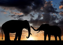 Silhouette elephant Royalty Free Stock Image