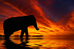. Silhouette of elephant against a red sky during sunset Stock Photography