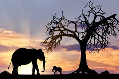 Silhouette of an elephant with calf Royalty Free Stock Photography