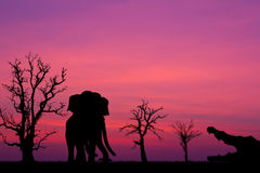 Silhouette elephant and the crocodile. Royalty Free Stock Images