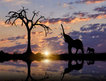Silhouette of Elephant and cub near the river Royalty Free Stock Photos