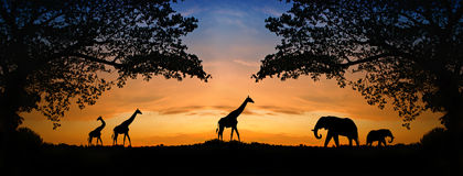 Silhouette elephant and giraffes Royalty Free Stock Image