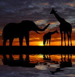 Silhouette elephant and giraffes Stock Photography