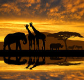 Silhouette elephant,giraffes,rhino and zebras. In the sunset Stock Photo