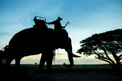 Silhouette  elephant with mahout Stock Photos