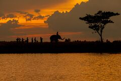 Silhouette of elephant parade and culture in Thailand
