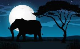 Silhouette Elephant in Savana Night Stock Images