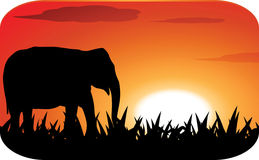 Silhouette elephant with sunset Royalty Free Stock Image