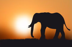 Silhouette of elephant at sunset Stock Photos