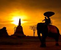 Silhouette an elephant, Thailand Stock Photo