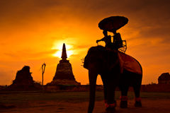 Silhouette an elephant, Thailand Stock Photography