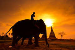 Silhouette an elephant, Thailand Royalty Free Stock Images
