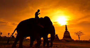 Silhouette an elephant, Thailand Royalty Free Stock Photography