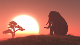 Silhouette of elephant and tree Stock Photography