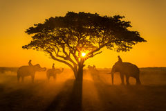 Silhouette of the elephant under a tree in Thailand. stock image
