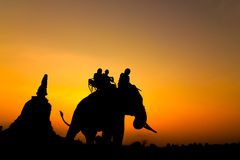 Silhouette of elephants Stock Photo