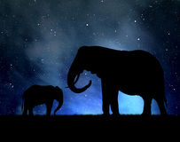Silhouette elephants. In the night sky Stock Images