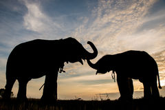 The silhouette of elephants Stock Image