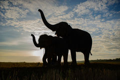 The silhouette of elephants Royalty Free Stock Photography