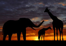 Silhouette elephants and giraffe Stock Photos