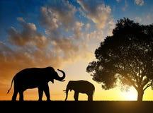 Silhouette elephants Stock Photo