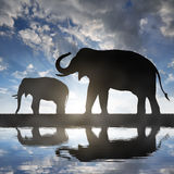 Silhouette elephants Royalty Free Stock Images