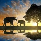 Silhouette elephants Royalty Free Stock Photo