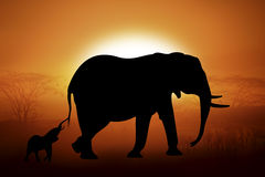 Silhouette of a elephants in sunset Stock Photography