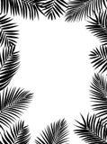 Silhouette en feuille de palmier Photos libres de droits