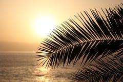 Silhouette en feuille de palmier au coucher du soleil Photos libres de droits