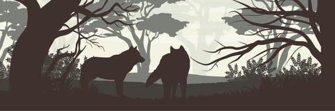silhouette En packe av två varger i en tät skog stock illustrationer
