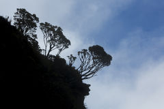 Silhouette of endemic plants on Mount Roraima, Venezuela Royalty Free Stock Photography