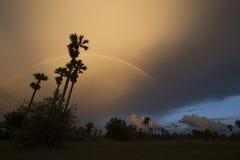 Silhouette et arc-en-ciel de palmier Photo libre de droits