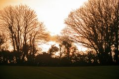 Silhouette et coucher de soleil d'arbre d'hiver dans les terres cultivables près de Bexhill à East Sussex, Angleterre image stock