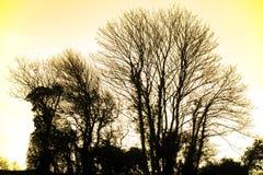 Silhouette et coucher de soleil d'arbre d'hiver dans les terres cultivables près de Bexhill à East Sussex, Angleterre photos stock