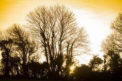 Silhouette et coucher de soleil d'arbre d'hiver dans les terres cultivables près de Bexhill à East Sussex, Angleterre images stock