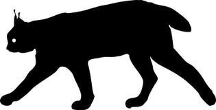 Silhouette of Eurasian lynx Stock Image