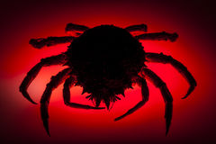 Silhouette, European spider crab, red, stealth, danger, prowling. Scary silhouette. Red backlit effect on shadow figure of European spider crab (Maja Squinado) Royalty Free Stock Photo