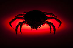 Silhouette, European spider crab, red, stealth, danger, prowling. Scary silhouette. Red backlit effect on shadow figure of European spider crab (Maja Squinado) Royalty Free Stock Images