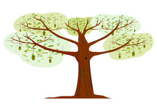 Silhouette of exotic tree. Royalty Free Stock Photo